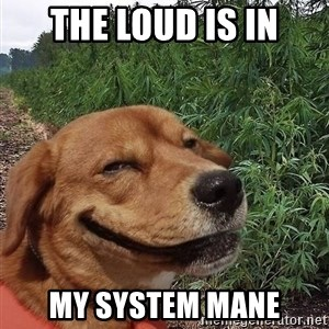 dogweedfarm - The Loud is in My System Mane