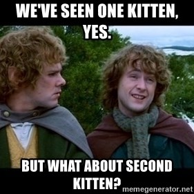 What about second breakfast? - We've seen one kitten, yes.  But what about second kitten?