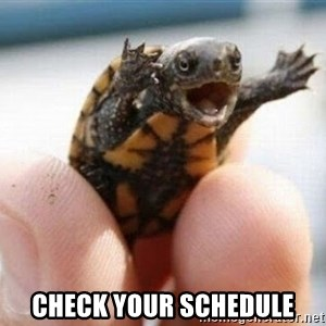 angry turtle -  Check your schedule