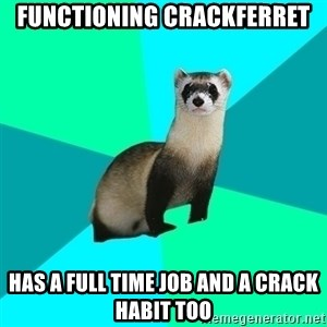 Obvious Question Ferret - functioning crackferret has a full time job and a crack habit too