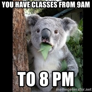 Koala can't believe it - you have classes from 9am to 8 pm