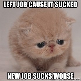 Super Sad Cat - Left job cause it sucked New job sucks worse