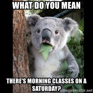 Koala can't believe it - WHAT DO YOU MEAN THERE'S MORNING CLASSES ON A SATURDAY?
