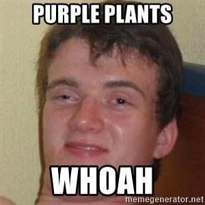 10guy - PURPLE PLANTS WHOAH