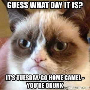 Angry Cat Meme - guess what day it is? it's tuesday. go home camel - you're drunk