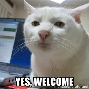 Serious Cat -  Yes, Welcome