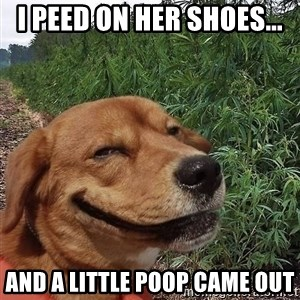 dogweedfarm - i peed on her shoes... and a little poop came out
