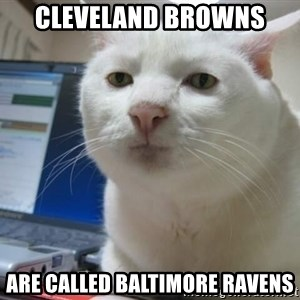 Serious Cat - Cleveland Browns Are called Baltimore Ravens