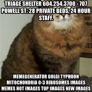 ZOE GREAVES DTES VANCOUVER - Triage Shelter 604.254.3700 - 707 Powell St: 28 private beds, 24 hour staff. MemeGenerator golgi typhoon mitochondria 0-3 ribosomes Images Memes Hot Images Top Images New Images
