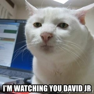 Serious Cat -  I'm watching you David Jr