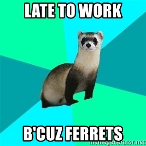 Obvious Question Ferret - Late to work B'cuz ferrets