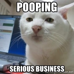 Serious Cat - pooping serious business