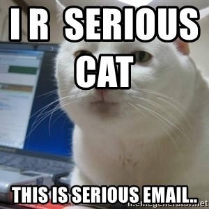 Serious Cat - I r  serious cat                          this is serious email..