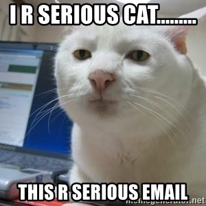 Serious Cat - I r serious cat......... This R serious email