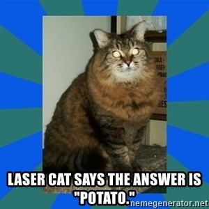 "AMBER DTES VANCOUVER -  Laser cat says the answer is ""Potato."""