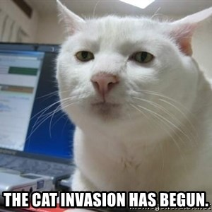 Serious Cat -  The cat invasion has begun.