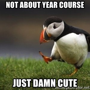 puffin guy - Not about Year Course Just damn cute