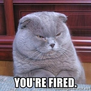 Serious Cat -  You're fired.
