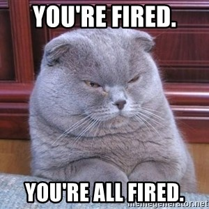 Serious Cat - You're fired. You're all fired.