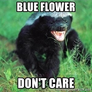 Honey Badger Actual - BLUE FLOWER DON'T CARE