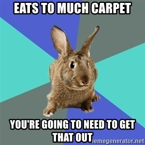 Roommate Rabbit - Eats to much carpet You're going to need to get that out
