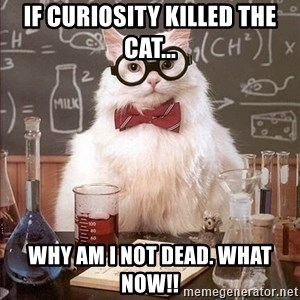 Chemistry Cat - if Curiosity killed the cat... why am i not dead. what now!!