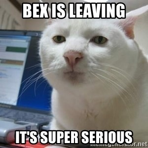 Serious Cat - Bex is leaving It's super serious