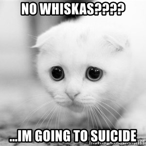 Sadcat - No Whiskas???? ...im going to suicide