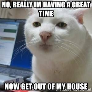 Serious Cat - no, really Im having a great time  now get out of my house