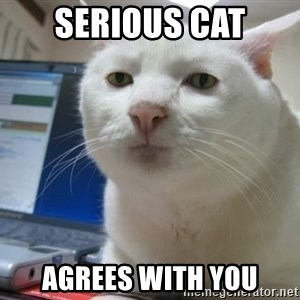 Serious Cat - Serious Cat Agrees with you