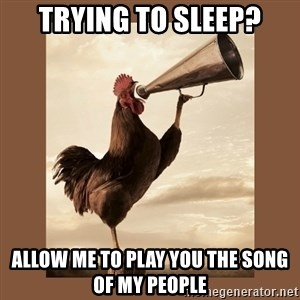 Rooster - Trying to sleep? Allow me to play you the song of my people
