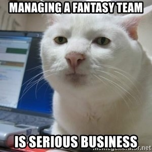 Serious Cat - Managing a Fantasy team is serious business