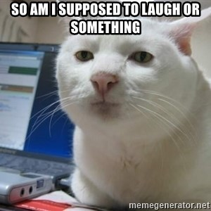 Serious Cat - so am i supposed to laugh or something