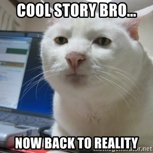 Serious Cat - Cool story bro... Now back to reality