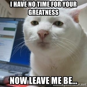 Serious Cat - I have no time for your greatness now leave me be...