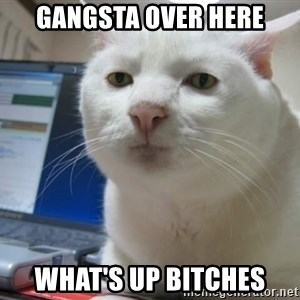 Serious Cat - gangsta over here what's up bitches