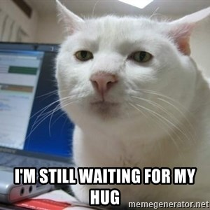 Serious Cat -  i'm still waiting for my hug
