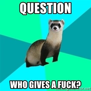 Obvious Question Ferret - Question Who gives a fuck?