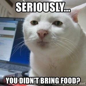 Serious Cat - Seriously... You didn't bring food?