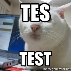 Serious Cat - tes test