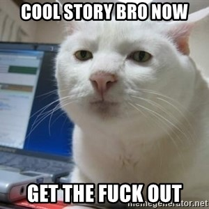 Serious Cat - cool story bro now get the fuck out