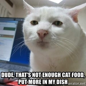 Serious Cat -  dude, that's not enough cat food, put more in my dish