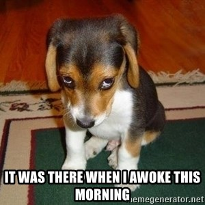 Sad Puppy -  it was there when i awoke this morning