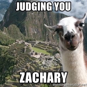 Bossy the Llama - Judging you Zachary