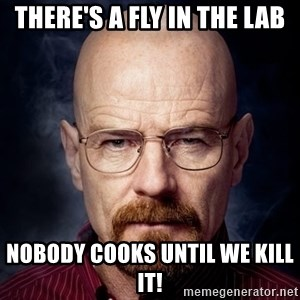 Breaking Bad Walter - There's a fly in the lab nobody cooks until we kill it!