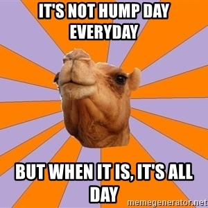 Foul Bachelor Camel - it's not hump day everyday  but when it is, it's all day
