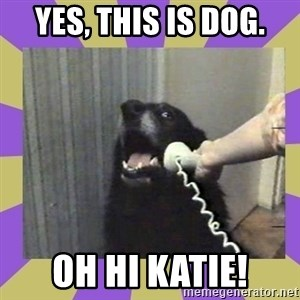Yes, this is dog! - YES, THIS IS DOG. oh hi katie!