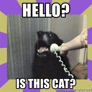 Yes, this is dog! - Hello? is this cat?