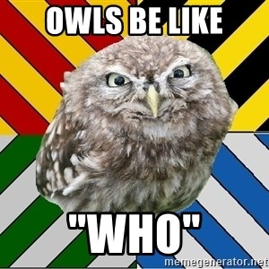 "JEALOUS POTTEROMAN - Owls be like ""Who"""