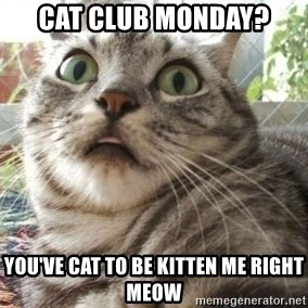 scared cat - Cat club monday? you've cat to be kitten me right meow